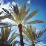 Miami Beach - Ocean Drive - Palms